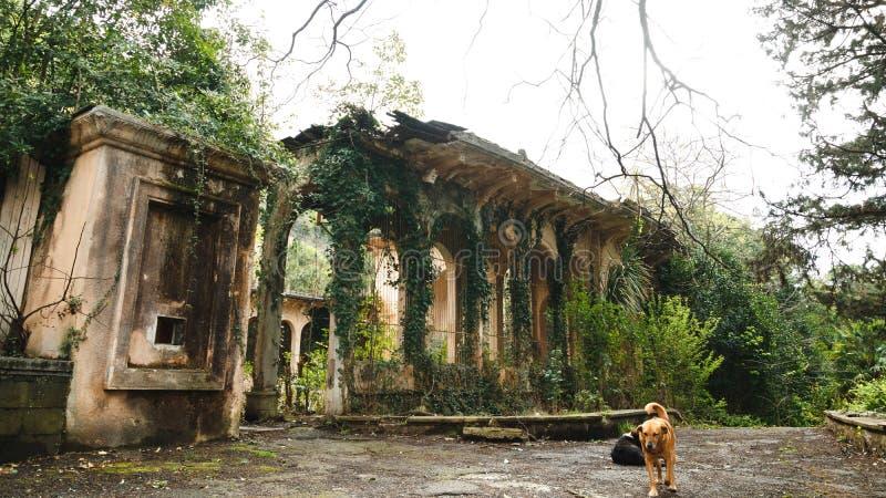 Verdwaalde hond op achtergrond van verlaten ruïnes royalty-vrije stock afbeelding