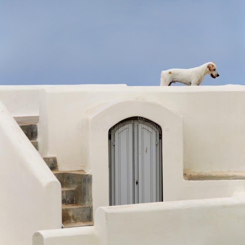 Verdwaalde hond op Santorini stock foto's