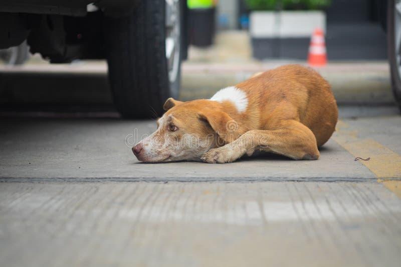 Verdwaalde hondslaap op de vloer royalty-vrije stock fotografie
