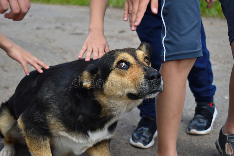 Verdwaalde Hongerige Hond De kinderen strijken de verdwaalde doen schrikken hond op de straat royalty-vrije stock fotografie