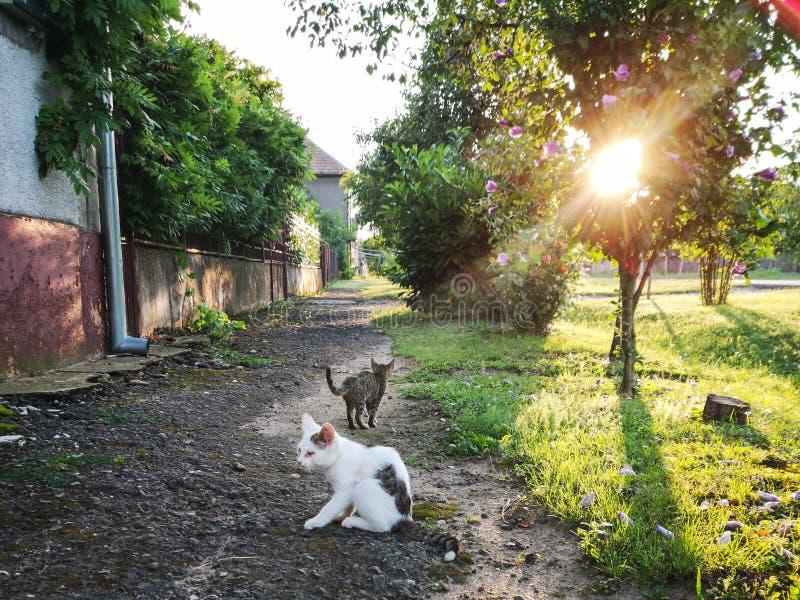 Verdwaalde kat stock afbeeldingen