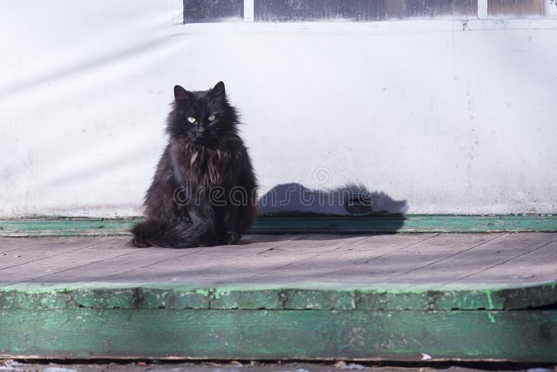 Verdwaalde kat royalty-vrije stock fotografie