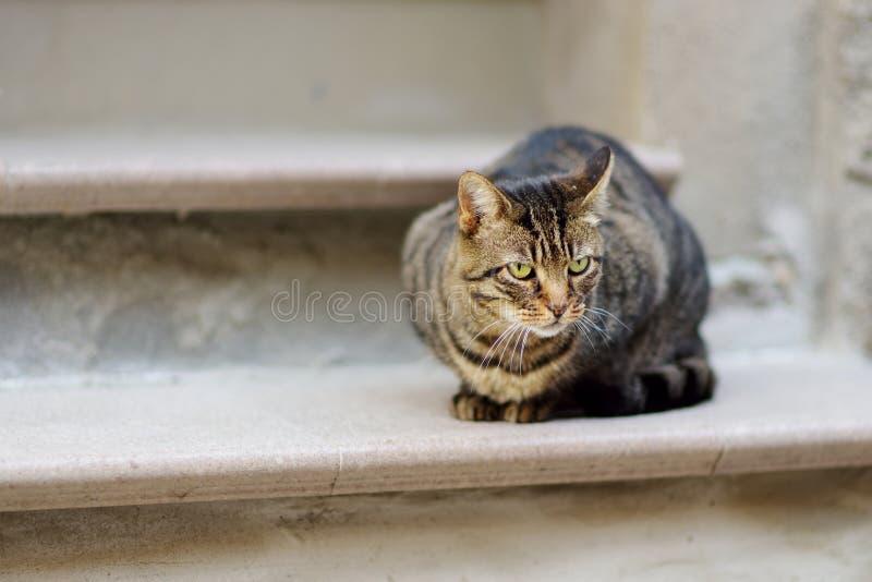 Verdwaalde kat op de straat van Riomaggiore, het grootst van de vijf eeuw-oude dorpen van Cinque Terre, Italiaanse Riviera, Ligur royalty-vrije stock foto's