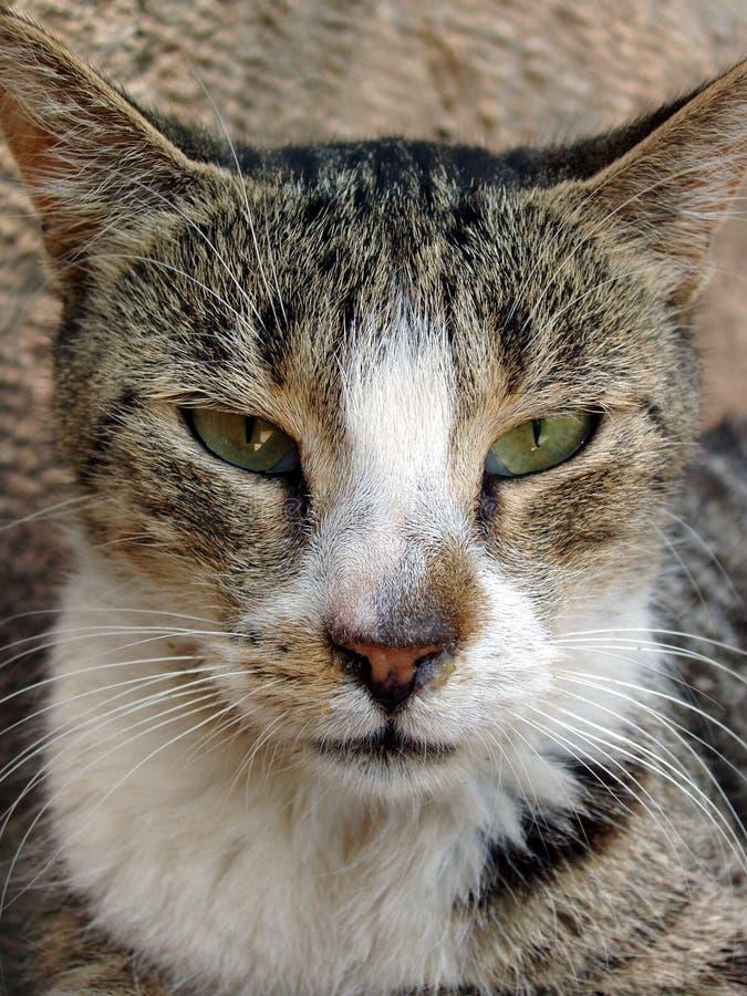 Verdwaalde katten dichte omhooggaand stock afbeelding