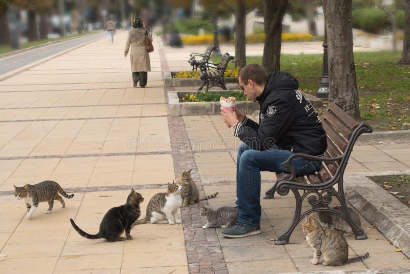 Verdwaalde katten die voor voedsel bedelen stock foto