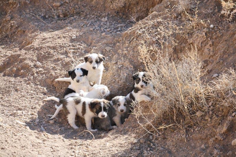 Verdwaalde puppy stock afbeelding