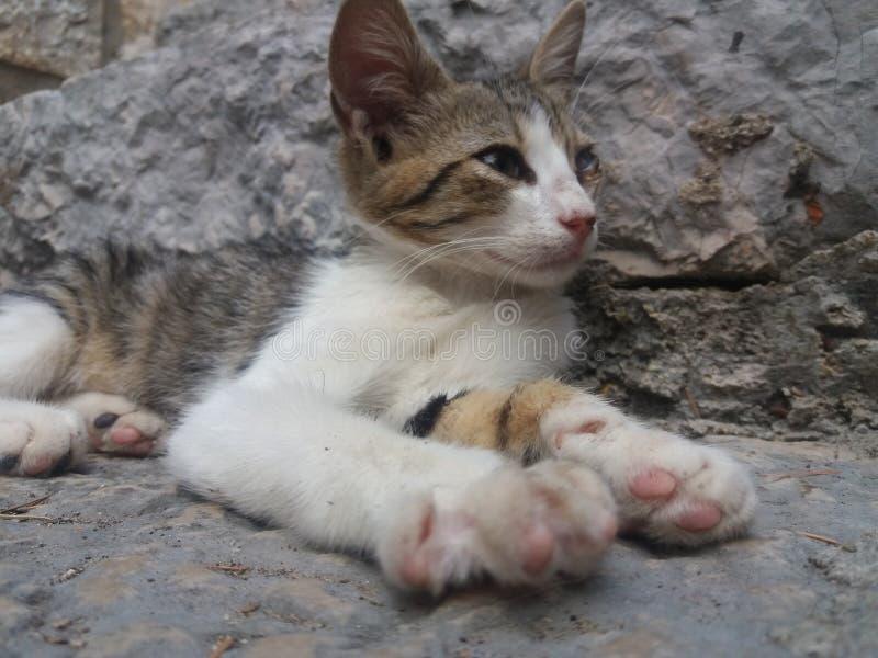 Verdwaalde wilde kat met oogbesmetting royalty-vrije stock afbeeldingen