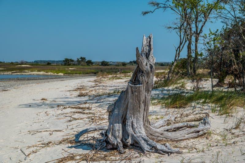 Verfallener Baumstumpf auf dem Strand stockbild