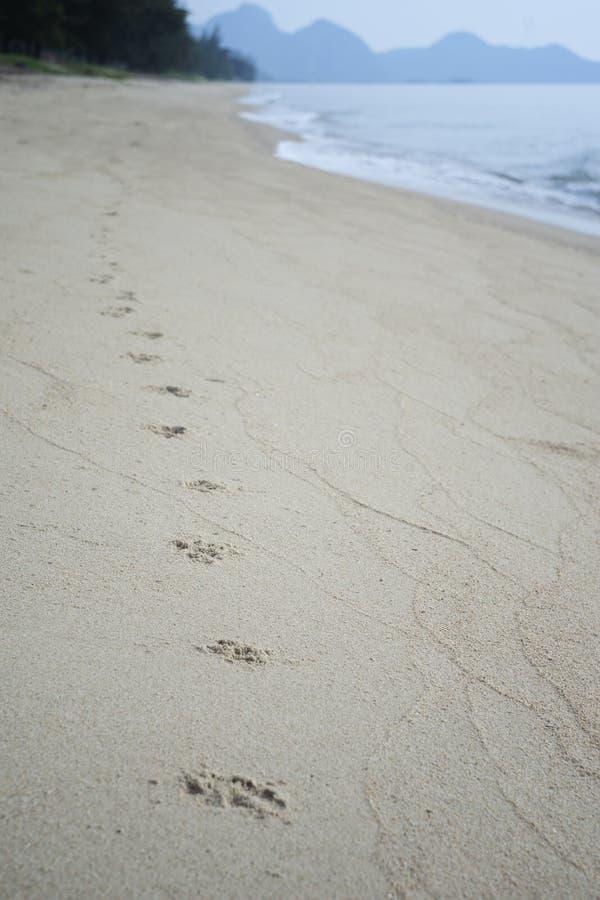 Verfolgen Sie Abdruckbahn entlang einem sandigen Strand zum Ufer Hundeschritte in einem Sand Gefiltertes Bild Selektiver Fokus stockbild