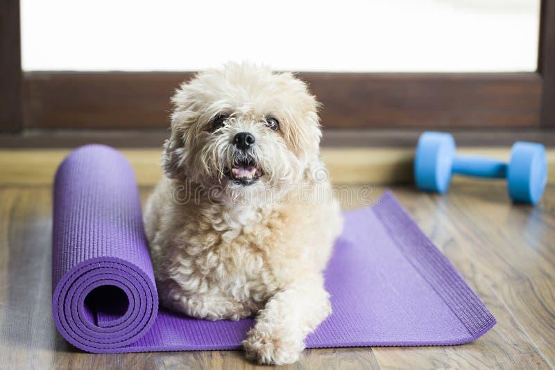 Verfolgen Sie das Sitzen auf einer Yogamatte und für Übung und liste konzentrieren stockbilder