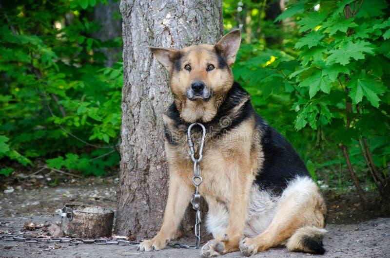 Verfolgen Sie Haustiere des Kettengefängnistierherbst-Sommers traurig stockbilder