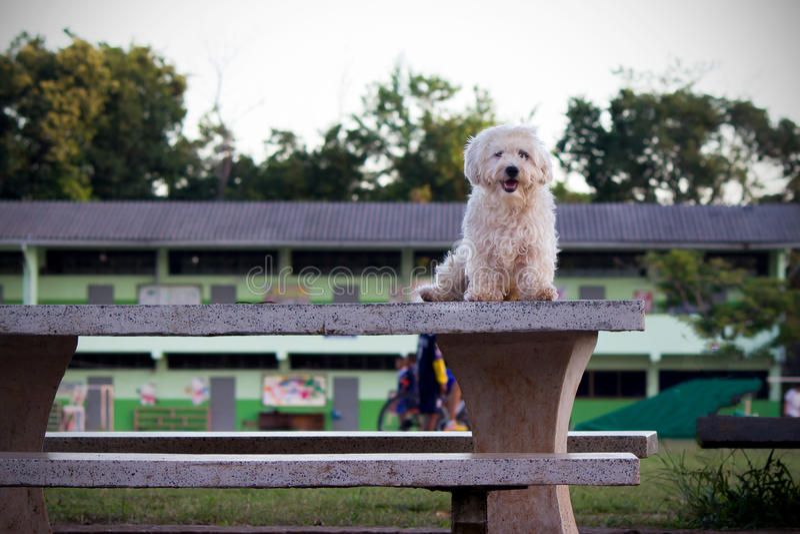 Verfolgen Sie Stellung auf einer Tabelle in einem allgemeinen Park stockfotos