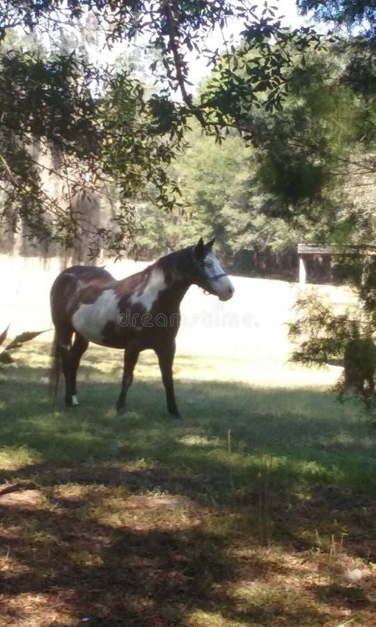 Verfpaard en poney stock afbeeldingen