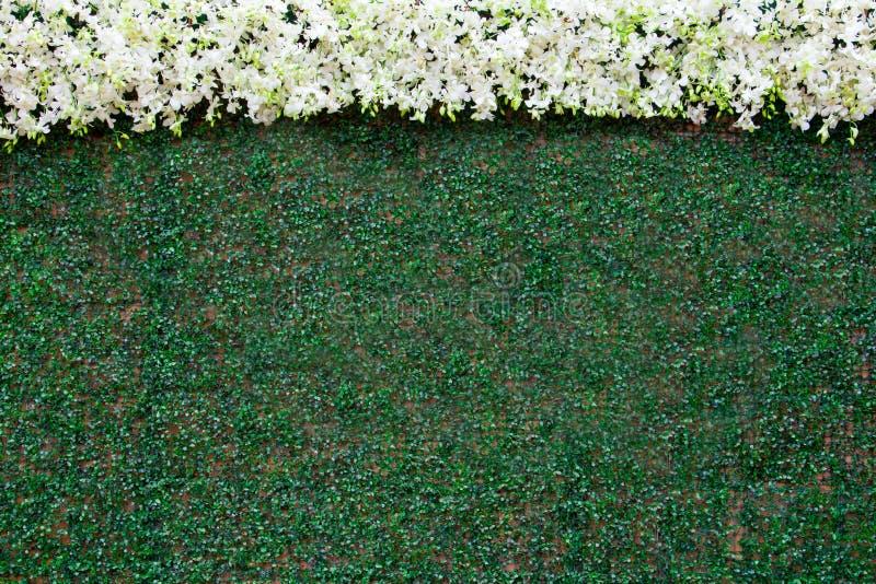 Verfraai muurachtergrond van kunstmatig blad en witte orchidee voor huwelijkspartij royalty-vrije stock foto's