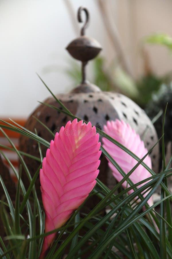 Verfraaid met exotische bloemen royalty-vrije stock afbeelding