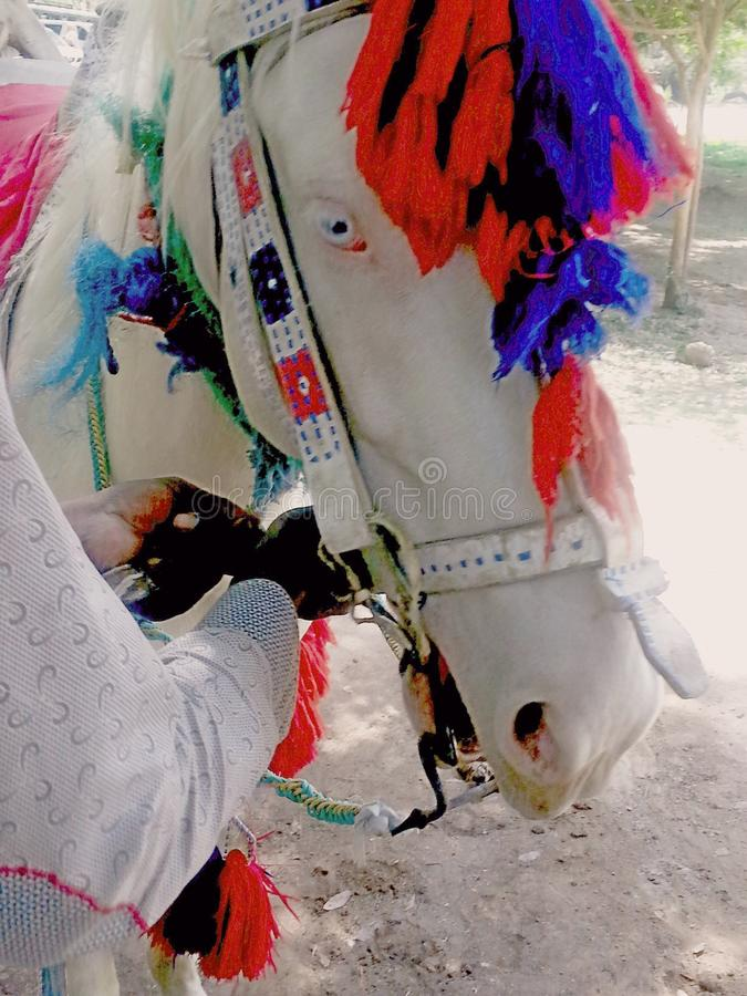 Verfraaid paard stock fotografie