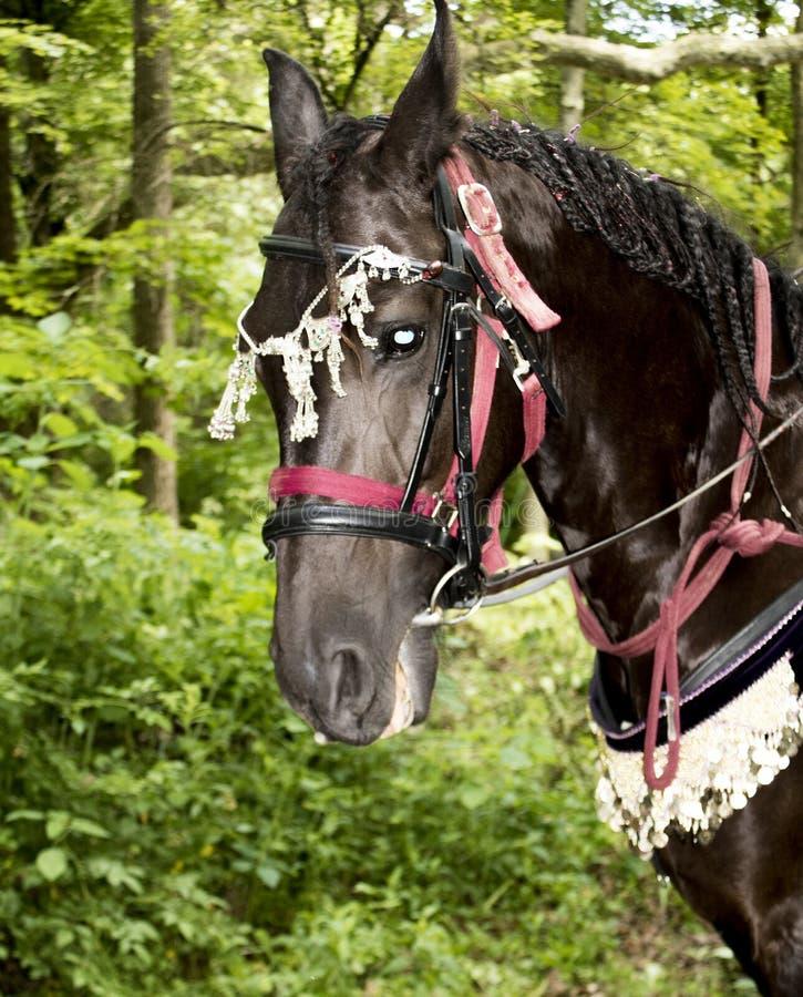Verfraaid paard bij festival stock afbeeldingen