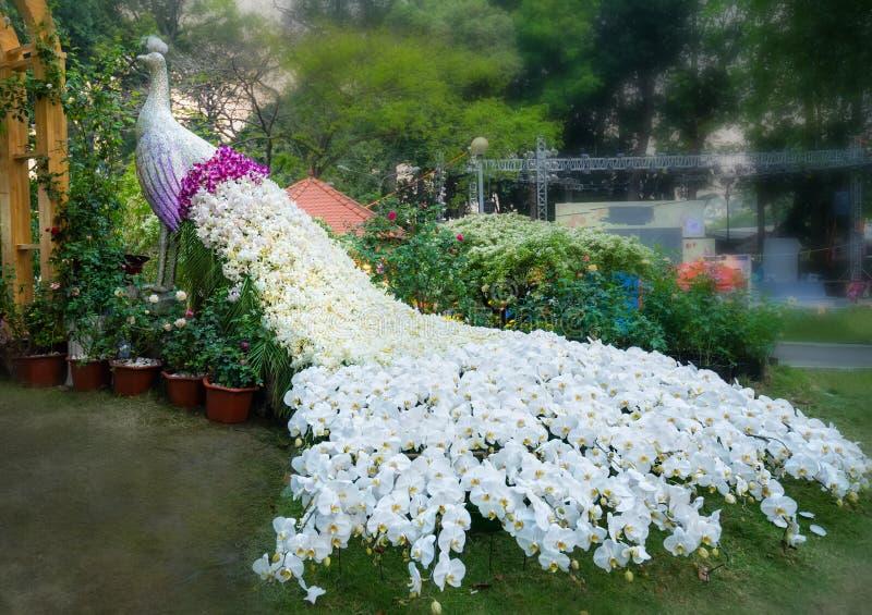 Verfraaide de orchideeën van de tapijtpauw royalty-vrije stock fotografie