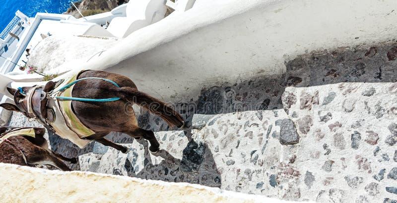 Verfraaide ezels op de steile smalle straat van Santorini (Oia), Griekenland stock afbeeldingen