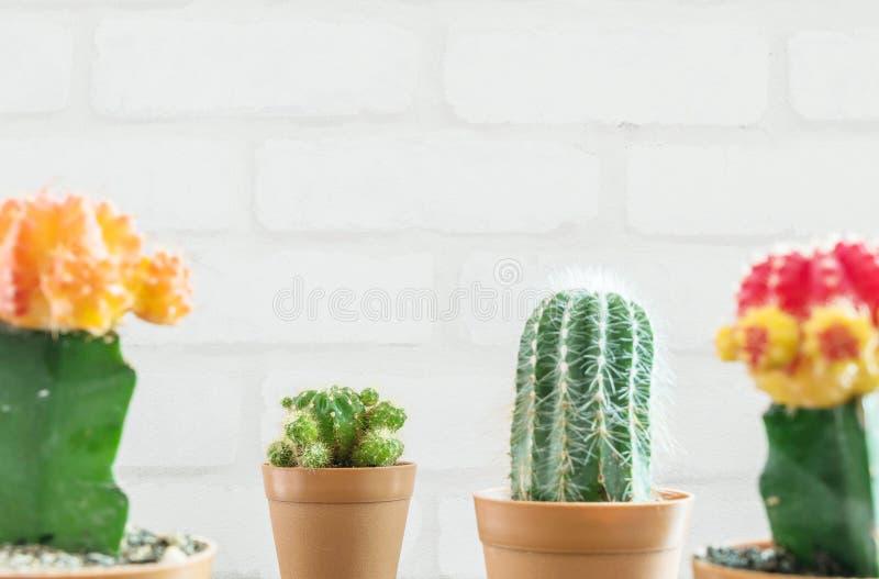 Verfraait de close-up verse groene cactus in bruine plastic pot voor met vage groep kleurencactus en witte bakstenen muur geweven stock foto
