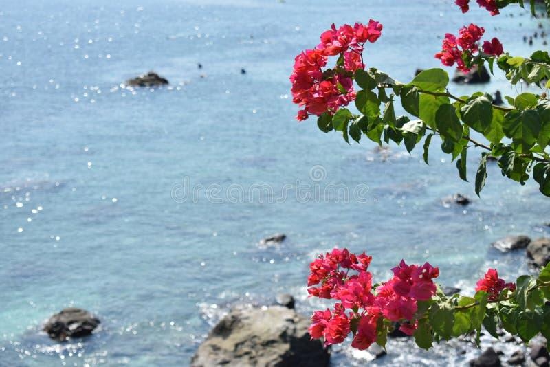 Verfrissende bloemochtend stock foto
