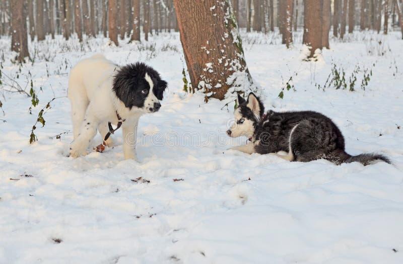 Vergadering van twee puppy in het de winterpark royalty-vrije stock foto