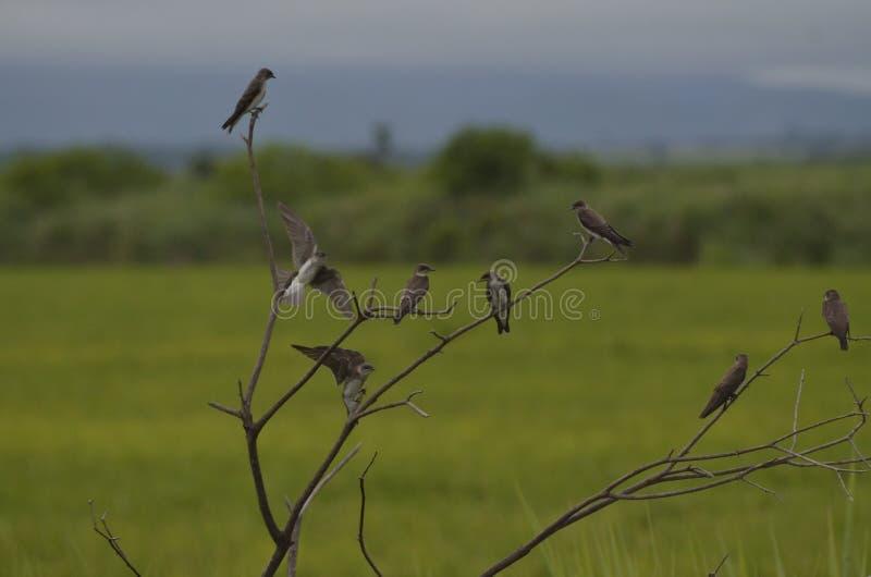 Vergadering van vogels stock afbeeldingen