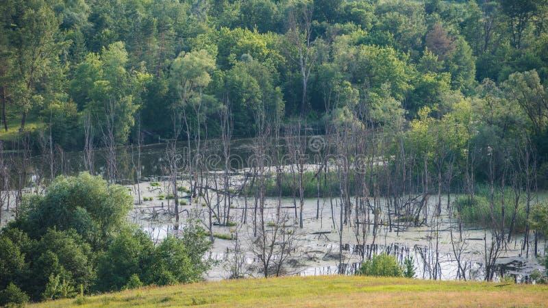 Vergankelijk Bos en Droge Bomen in de Rivier, Landschap in Landelijk royalty-vrije stock foto's