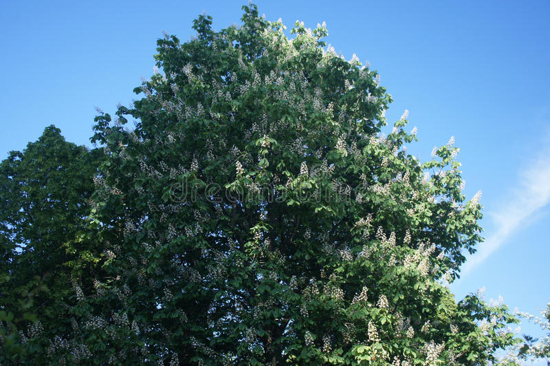 Vergankelijke boom stock fotografie
