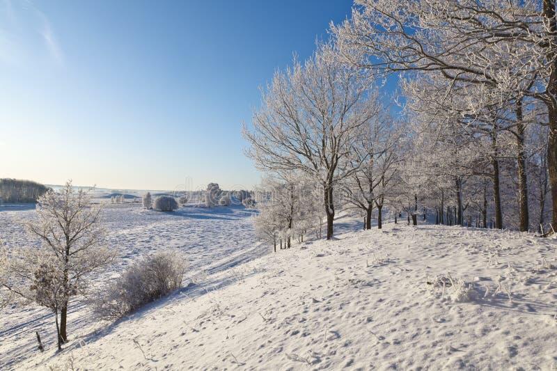 Vergankelijke boombos met sneeuw royalty-vrije stock fotografie