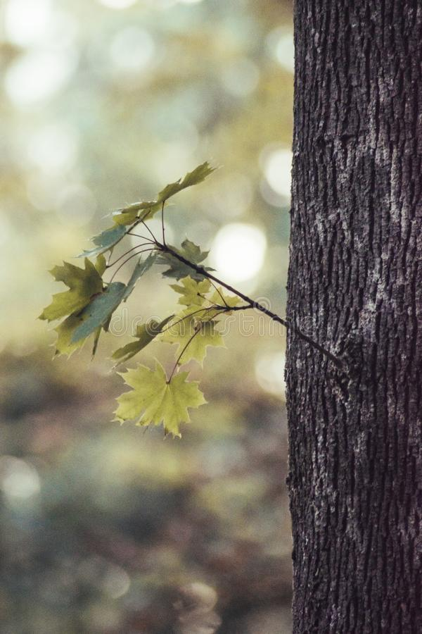 Vergat Autumn Leaf stock foto's