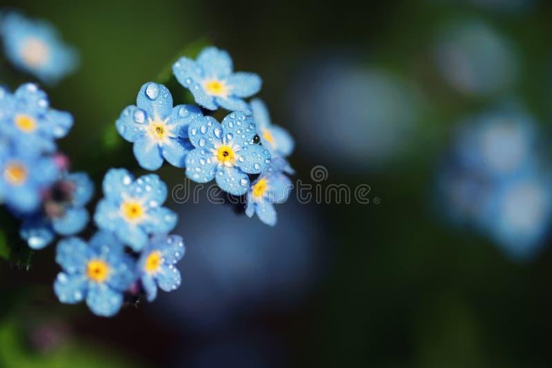 Vergeet me niet bloemen met kleurenfilters die worden gemaakt Sof royalty-vrije stock foto's