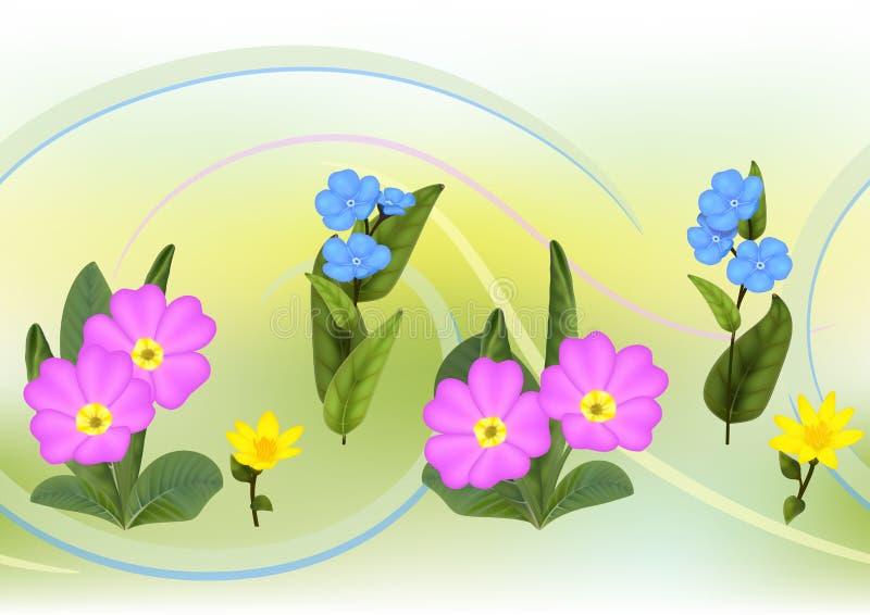 Vergeet-mij-nietjesprimula, de Kop bloeiende installaties van de Koning vector illustratie