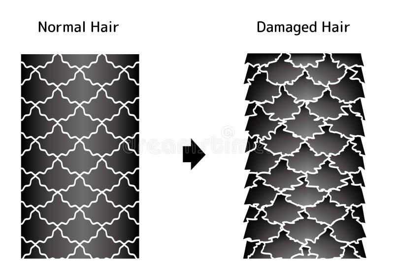Vergelijkende illustratie van gezond haar en beschadigd haar stock illustratie