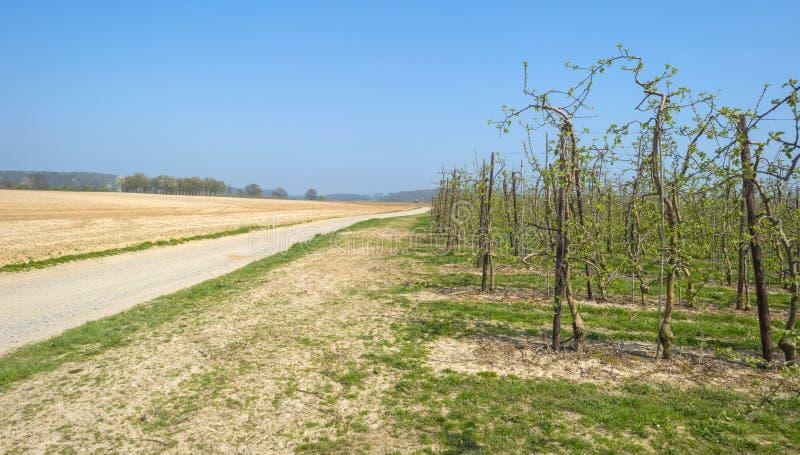 Verger avec les arbres fruitiers dans le bourgeon photographie stock libre de droits