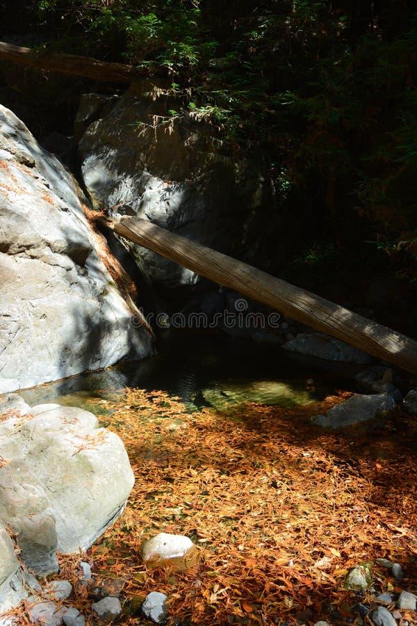Verger Big Sur la Californie de séquoia de réserve forestière d'aumôniers de visibilité directe - l'arbre tombé fait le pont à tr photographie stock