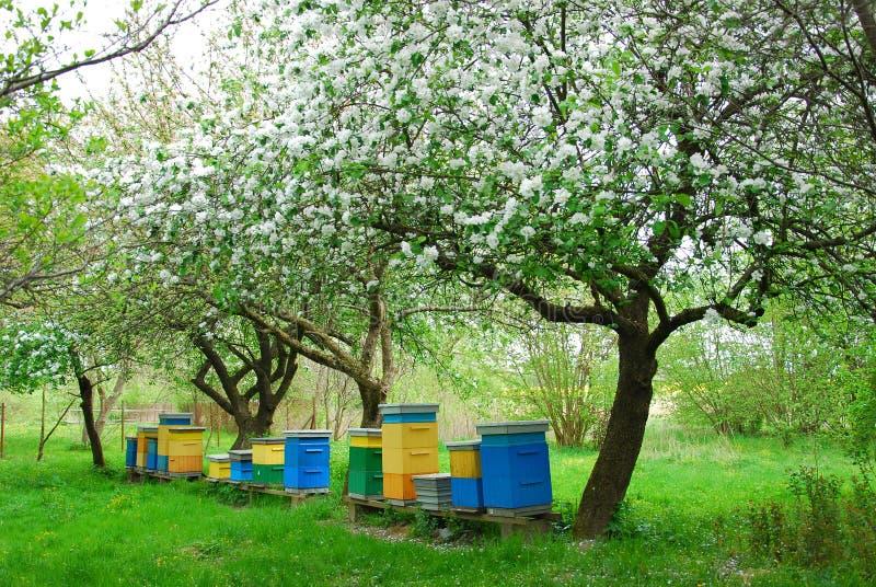 Verger coloré de ruches au printemps images stock
