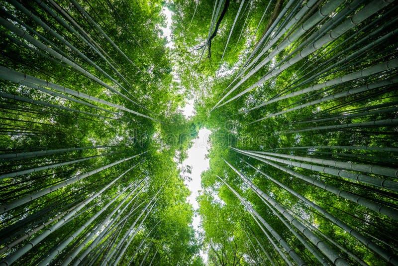 Verger de bambou d'Arashiyama photos stock