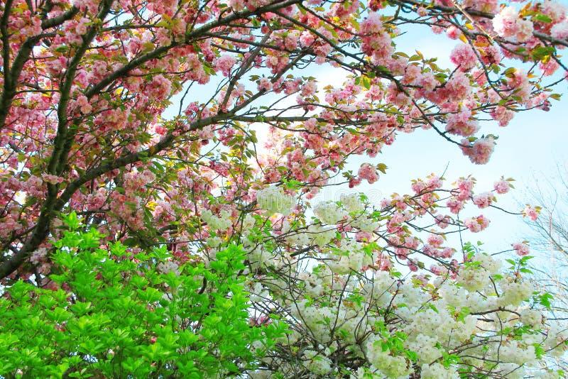 Verger de fleurs de pommier au printemps photo stock image du vert couleur 54370552 - Taille du pecher au printemps ...