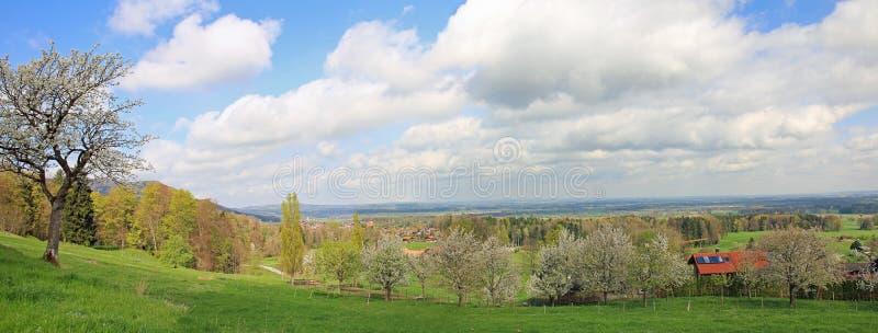 Verger de fruit de floraison, campagne bavaroise photo libre de droits
