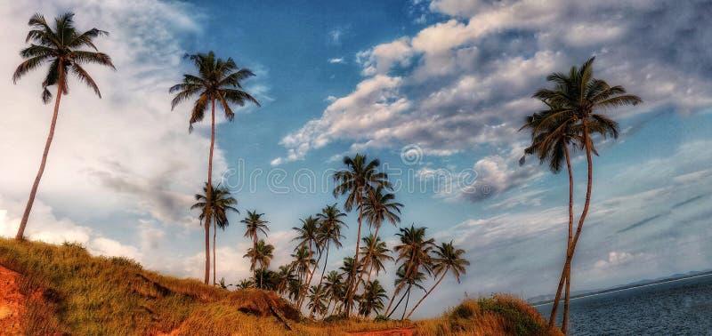 Verger de noix de coco dans le bord de mer sous le ciel nuageux blanc et bleu photos libres de droits