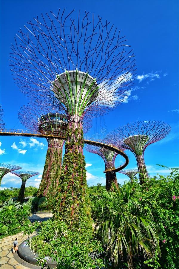 Verger de Supertree, jardins par la baie, Singapour photo libre de droits