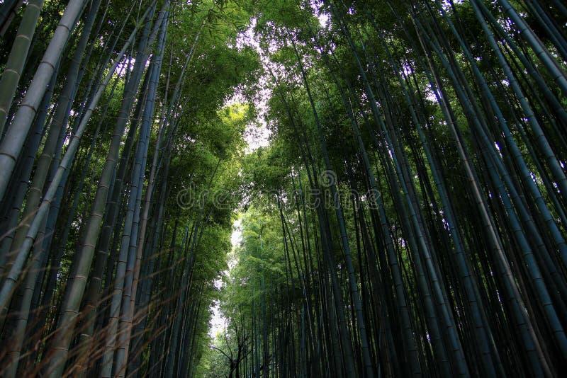 Verger en bambou c?l?bre d'Arashiyama, Japon image libre de droits
