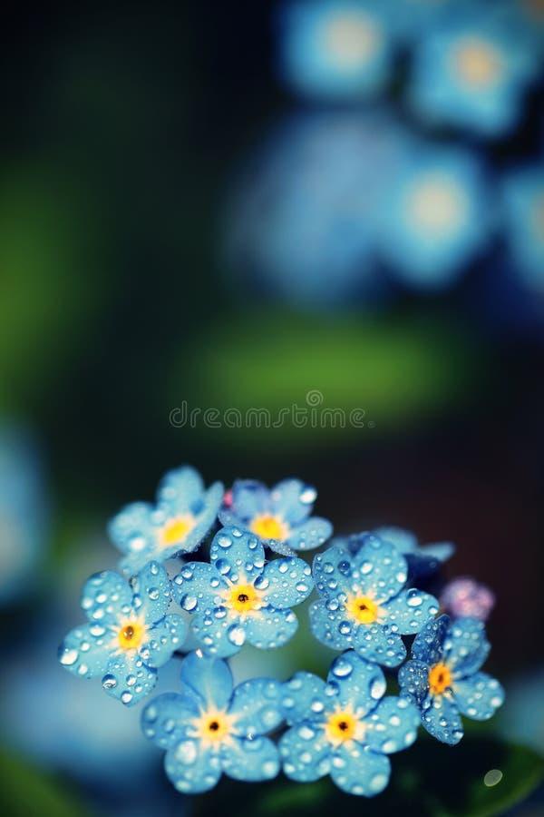 Vergessen Sie mich die nicht Blumen, die mit Farbfiltern gemacht werden Sof lizenzfreies stockfoto