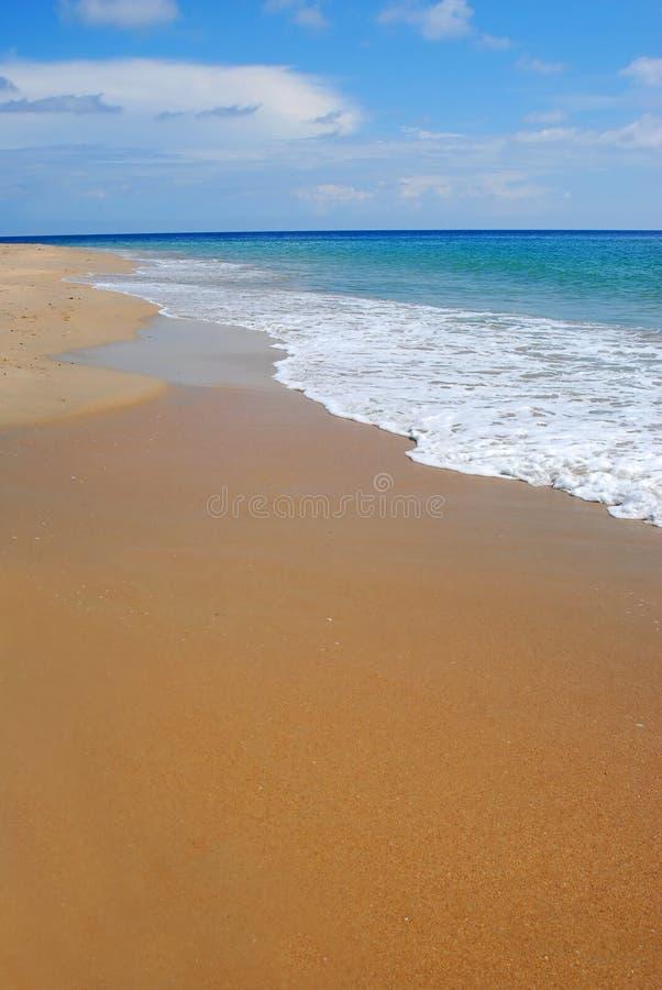 Vergoelijk op tropisch Caraïbisch strand stock foto