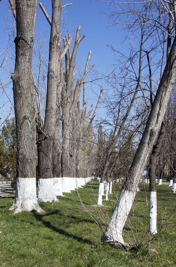 Download Vergoelijkte bomen stock afbeelding. Afbeelding bestaande uit gras - 39101463