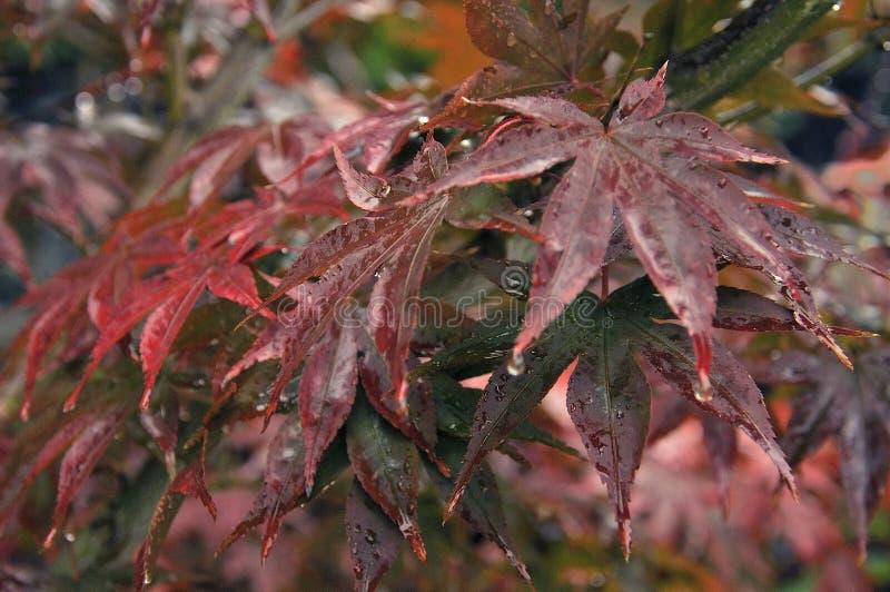 Verhaal van Kleurrijke Wildernis bij regen stock foto's