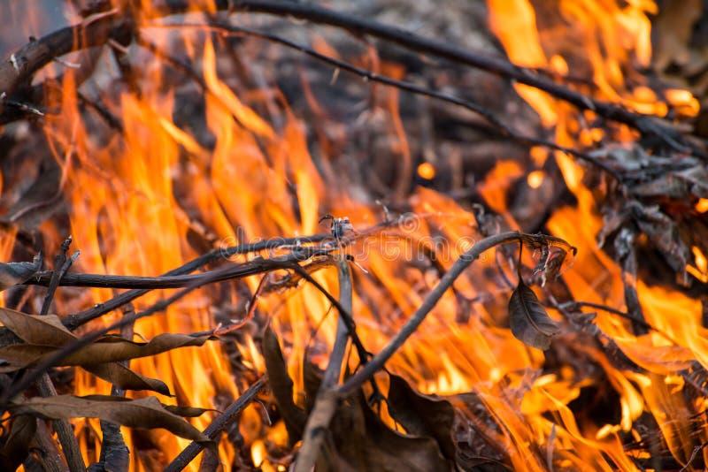 Verheerendes Feuer Burning stockfoto