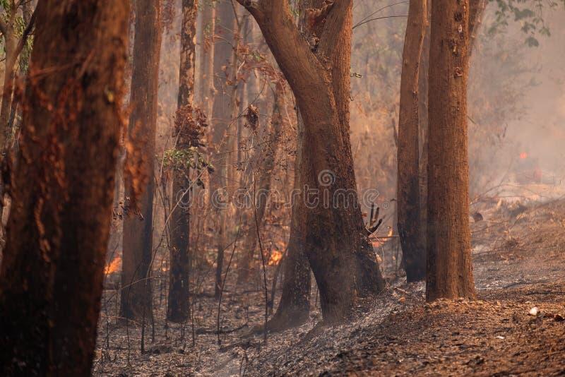 Verheerendes Feuer in Forrest Near die lokale Straße, Natur-Unfall im Sommer stockfotografie