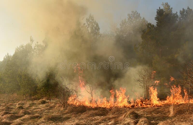 Verheerendes Feuer, Waldbrand, brennender Wald stockbilder